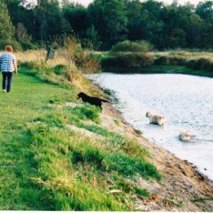 一般家庭に池